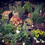 『おうちごはん』を、さらに美味しく。庭に植えるハーブを買いました。