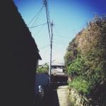 『風を感じる』木々のざわめき、鎌倉の小道さんぽ。