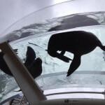 アシカが空中を舞う!サンシャイン水族館