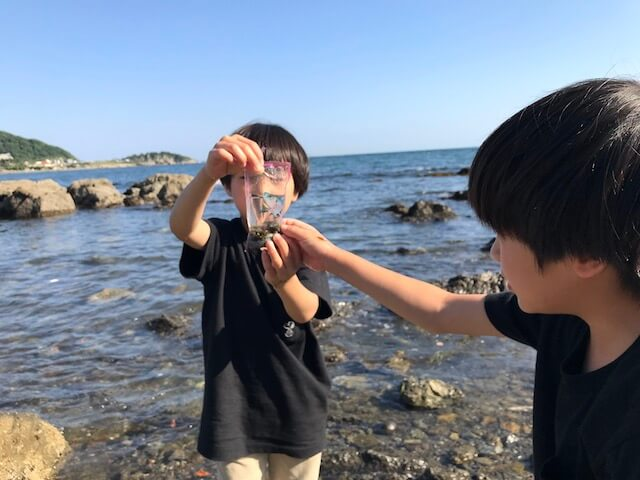 一色海岸 小魚が捕れる